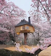 Pohádka na stromě v Japonsku