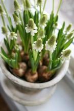 Jaro - květinová aranžmá