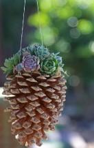 Překrásné dekorace ze sukulentů